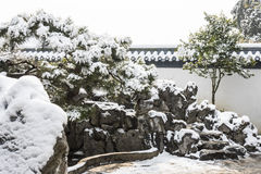 Snow covered pine Stock Photography