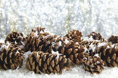Snow covered pine cones. Against a sparkling bckground Stock Photos