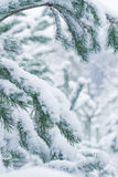 Snow-covered pine forest. Christmas Royalty Free Stock Photo