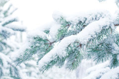 Snow-covered pine forest. Christmas Royalty Free Stock Image