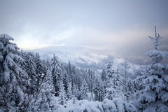 Snow covered pine forest in the mountains Stock Images