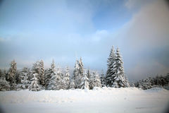 Snow covered pine forest in the mountains Stock Photos