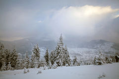 Snow covered pine forest in the mountains Royalty Free Stock Photo