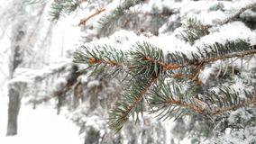 Snow-covered pine forest stock images