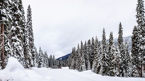 Snow Covered Pine in the Shuswap Highlands. Snow Covered Pine at the Sun Peaks Ski Resort in the Shuswap Highlands under cloudy skies royalty free stock photo