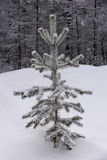 Snow covered pine Royalty Free Stock Photo
