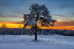 Snow covered pine tree, Cumberland Gap National Park. A single pine tree covered in fresh snow at sunset in the Cumberland Gap National Park Royalty Free Stock Photo