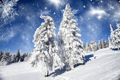 Snow covered pine tree in the mountains Royalty Free Stock Images