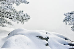 Snow covered pine tree and stone Stock Images