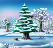 Snow-covered Pine Tree in a Winter Forest. Handmade illustration in a classic cartoon style Stock Image