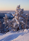 Snow-covered pine-trees. And South-Ural hills Stock Images