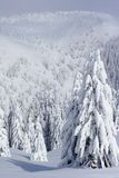 Snow covered pine trees in mountains Stock Image
