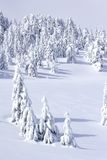 Snow covered pine trees in mountains Stock Photography