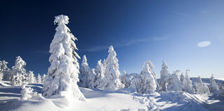 Snow covered pine trees in the mountains Stock Images