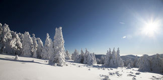 Snow covered pine trees in the mountains Stock Photography