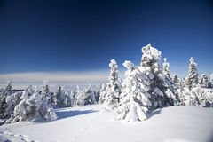 Snow covered pine trees in the mountains Royalty Free Stock Photography
