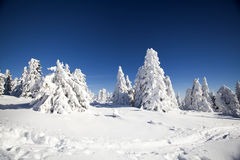 Snow covered pine trees in the mountains Stock Photos