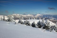Snow-covered pine trees and rounded peaks Fatra range Slovakia stock photo