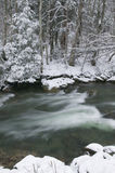 Snow covered pine trees on the side of a river in the winter. Royalty Free Stock Photography