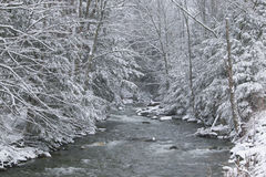 Snow covered pine trees on the side of a river in the winter. Stock Images