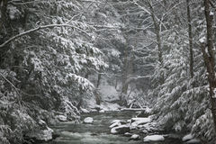 Snow covered pine trees on the side of a river in the winter. Royalty Free Stock Photo