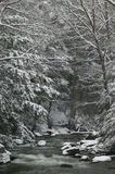 Snow covered pine trees on the side of a river in the winter. Stock Photography