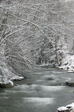 Snow covered pine trees on the side of a river in the winter. Stock Image