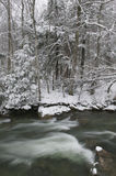 Snow covered pine trees on the side of a river in the winter. Royalty Free Stock Images