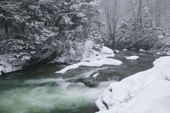 Snow covered pine trees on the side of a river in the winter. Stock Photo