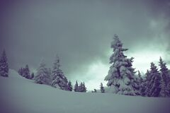 Snow Covered Pine Trees Under Cloudy Skies Stock Image