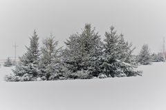 Snow covered pine trees in the Winter. Winter snow day in Michigan.  Beautiful pine trees Royalty Free Stock Image
