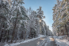 Snow covered pines - beautiful forests along rural roads. Stock Photos