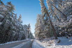 Snow covered pines - beautiful forests along rural roads. Royalty Free Stock Photos