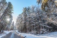 Snow covered pines - beautiful forests along rural roads. Stock Photo