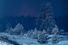 Snow covered pines Stock Photography