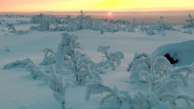 The snow-covered plain with low vegetation against far rising sun. stock video