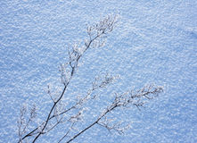 Snow covered plant Royalty Free Stock Images
