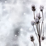 Snow covered plant. On sparkle background royalty free stock photography
