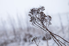 Snow covered plant in winter Stock Photography
