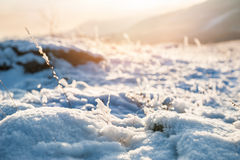 Snow-covered plants on the mountain Royalty Free Stock Photography