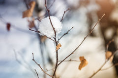 Snow-covered plants in winter forest at sunset Stock Images