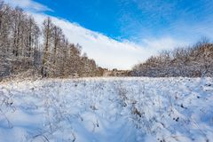 Snow covered polish landscape with rural road near fields and forest. Royalty Free Stock Images