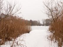 Snow covered pontoon near lake with reeds frozen winter day Stock Photography