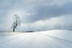 Snow covered road. Bright winter day with snow covered road and single tree and beautiful clouds Royalty Free Stock Image
