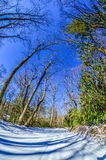 Snow covered road. Leads through the wooded forest Stock Image