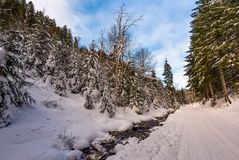 Snow covered road along the path through forest. Beautiful nature scenery in winter. location Synevyr National Nature Park, Ukraine Stock Photography