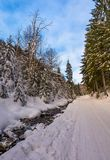 Snow covered road along the path through forest. Beautiful nature scenery in winter. location Synevyr National Nature Park, Ukraine stock images