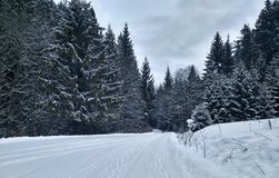 Snow-covered road among coniferous forest stock photo