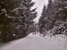 Snow-covered road among coniferous forest stock images