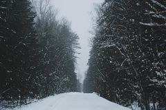 Snow-covered road royalty free stock photo